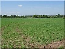SJ5723 : Farmland at Stanton upon Hine Heath by Philip Halling
