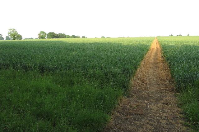 Footpath to Mixbury