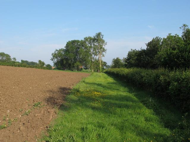 Public Footpath on Field margin near Hall Farm, Ditchingham