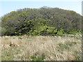 NR4650 : Oak woodland on a rocky knoll by M J Richardson