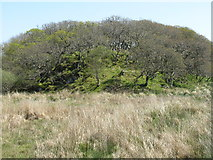 NR4650 : Oak woodland on a rocky knoll by M J Richardson