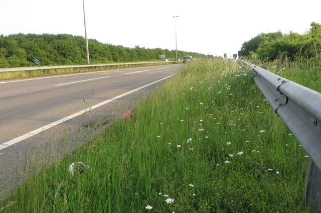 A43 and daisies