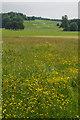 SU8612 : Spring meadow, West Dean Gardens by Ian Capper
