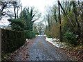 TQ1627 : Kings Lane by Robin Webster