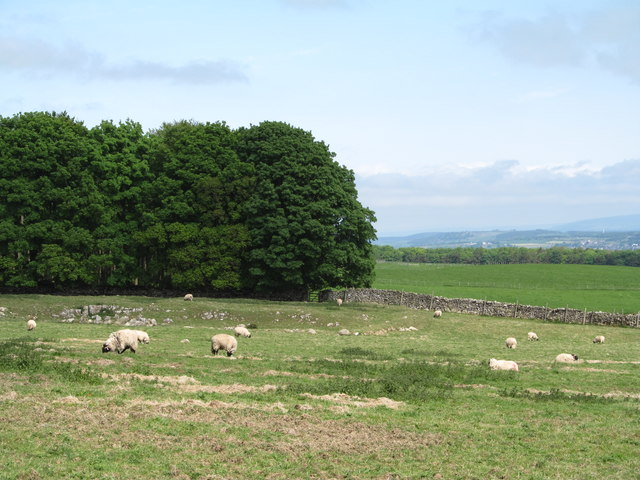 Sheep pasture Skirsgill Hill
