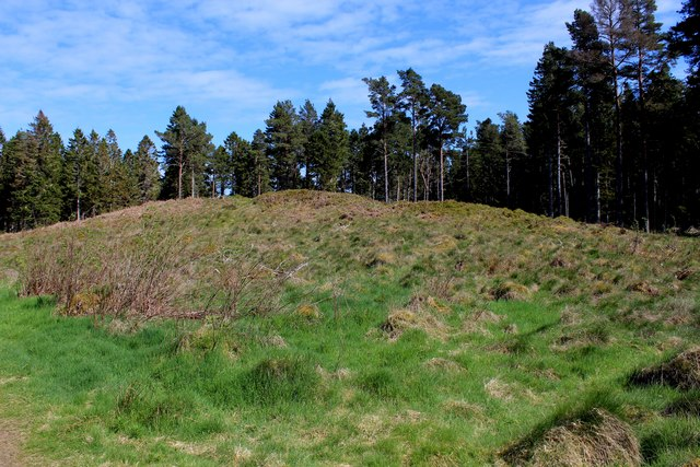 Hut Circles in Camore Wood