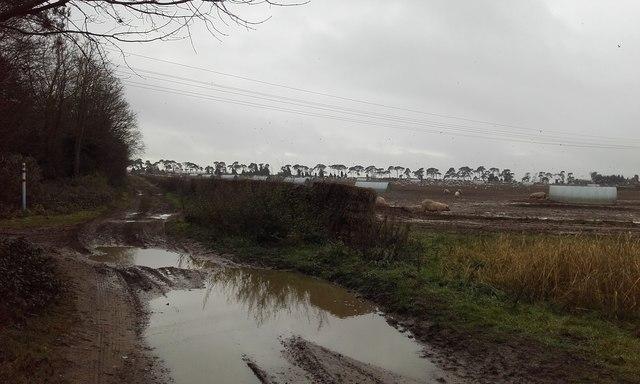 Icknield  Way Trail Near  Kentford Heath