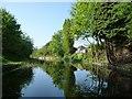 SJ9401 : Wyrley & Essington Canal,west of Moat House Bridge by Christine Johnstone