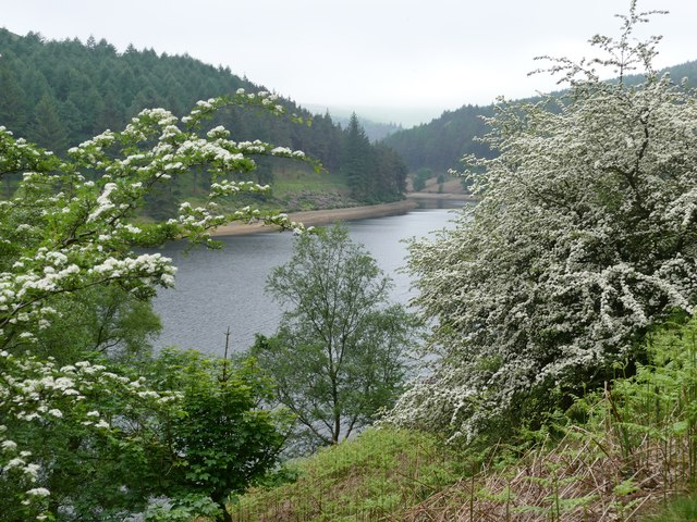 May blossom beside Howden Reservoir