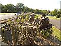 SE1535 : Pruned hedge in Lister Park  by Stephen Craven