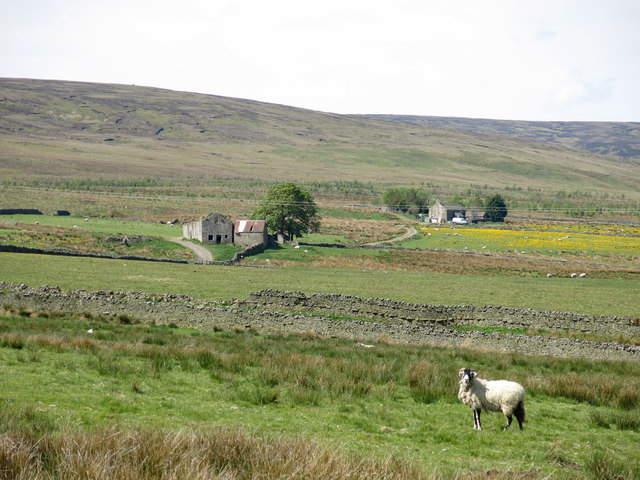 Wellhope Pastures (2)