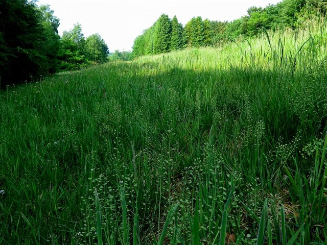 Grassland, Tyne Riverside