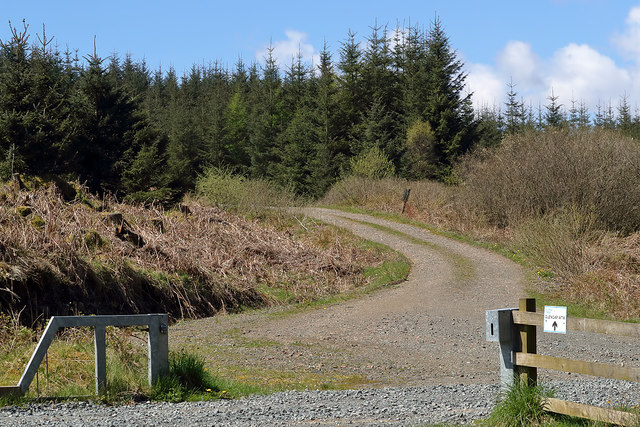 A track in Glencap Forest