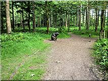SK1789 : Nature Trail at Fairholmes by David Dixon