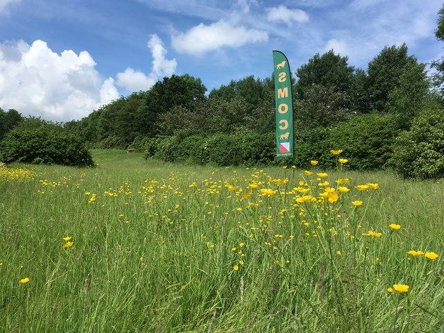 Howe Park on orienteering day