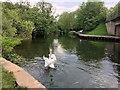 SU4415 : River Itchen, Mansbridge by David Dixon
