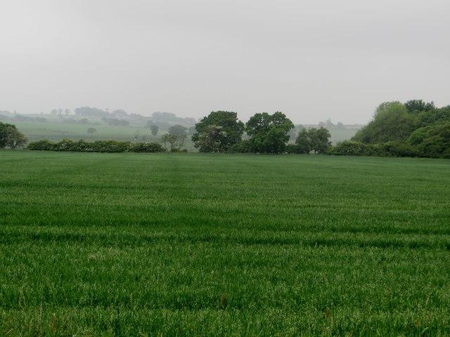 Arable field beside Abshields Wood