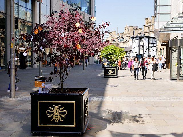Trees of Hope, New Cathedral Street
