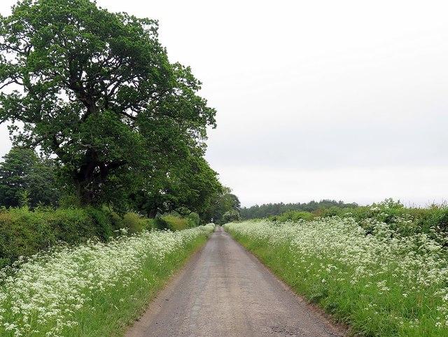 Minor road near Broom House