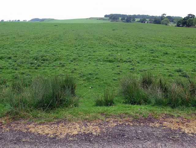 Pasture near Broomhouse Farm