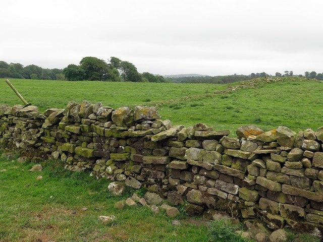 Field wall near Topley