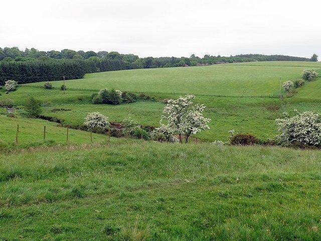River Wansbeck near Topley Wood