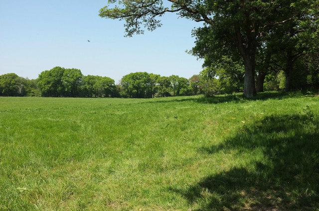 Field on Dunsbear Moor