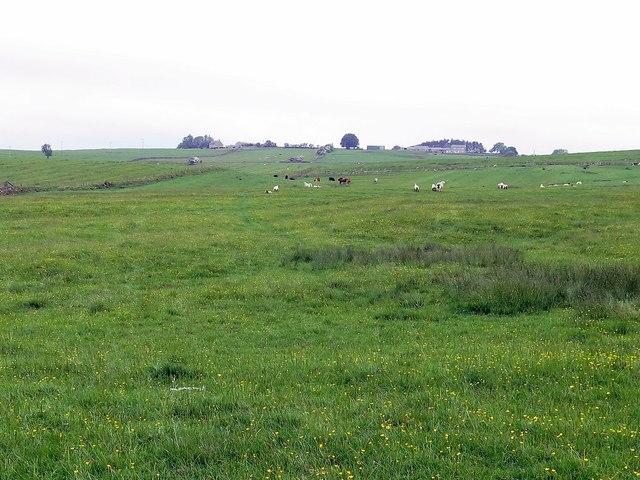 Pasture north-east of Kirkwhelpington