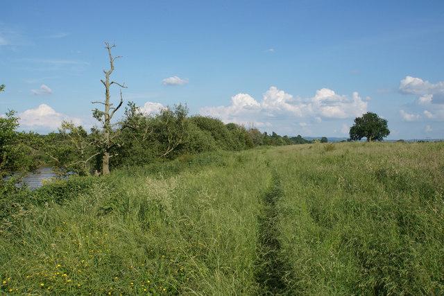 The Severn Way near Bushley