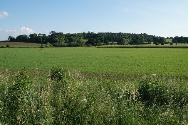 Emerging crop below Mossgreen Shrubbery