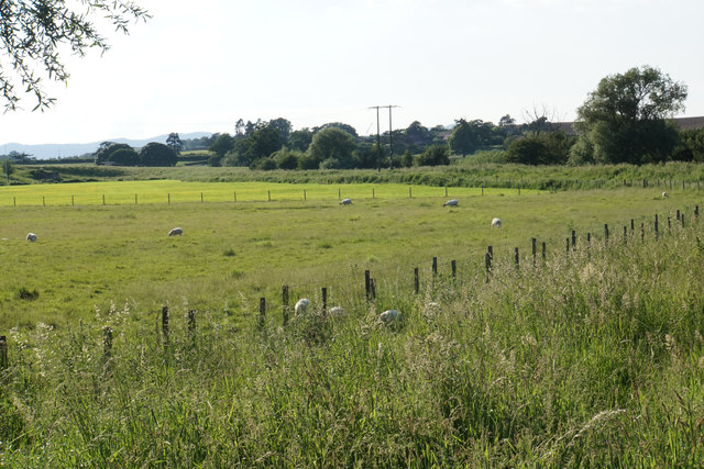 Sheep by the Severn Way