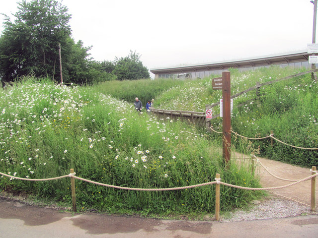 Ox-eye Daisies line the path to the Visitor Centre at College Lake