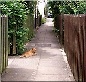 TG2101 : Ginger tomcat resting on a shady path by Evelyn Simak