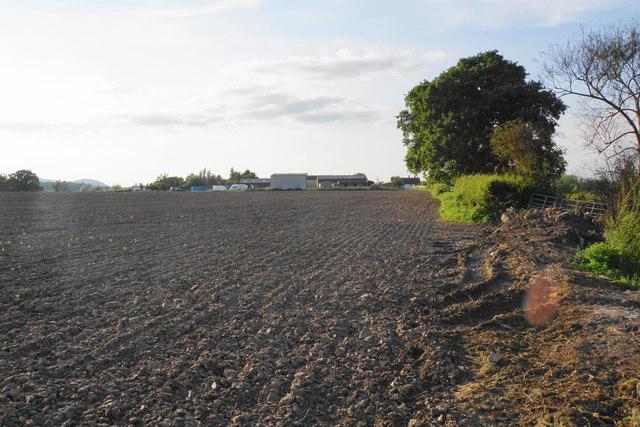 Field-edge path towards Upton