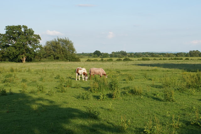 Grazing horses near Buryend Farm