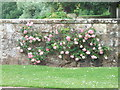 SP4079 : Roses, Coombe Abbey by Niki Walton