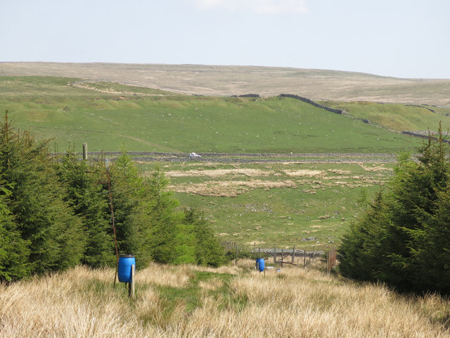 Firebreak in the plantation west of High Byre