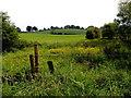 H5067 : Buttercups, Donaghanie / Annagh by Kenneth  Allen