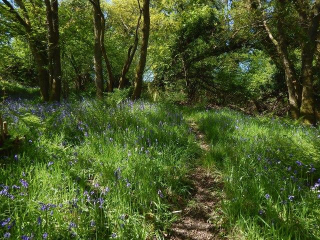 Renton Wood