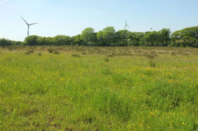 Eastacott Moor