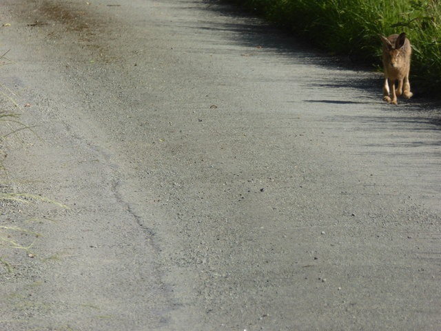 Lolloper on the lane at Plowden