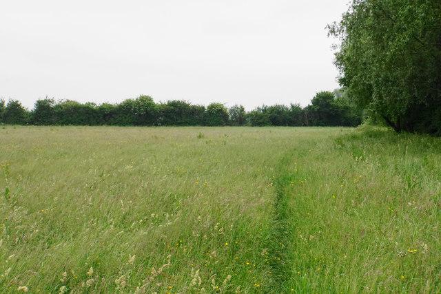 Footpath through long grass