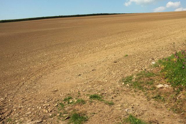 Tilled field northeast of Bulkworthy