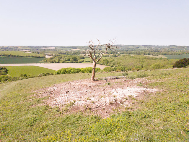 Cleared scrub on Old Winchester Hill