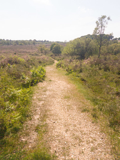 Path from Backley Inclosure to Soarley Beeches