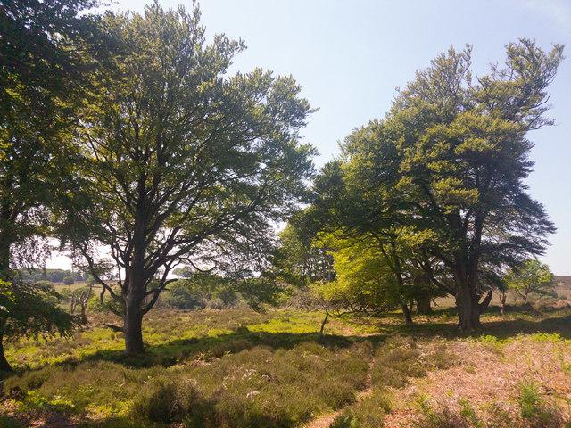 Path at Bushey Bradley