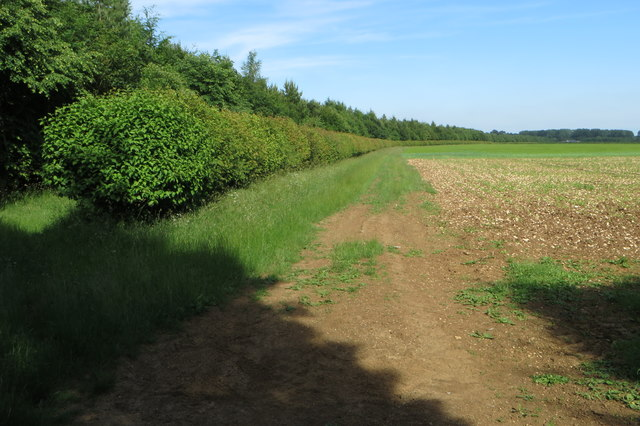 Plantation by the lane to Cottisford