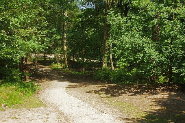 Alderley Edge woodland