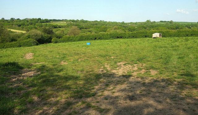 Pasture near Caute