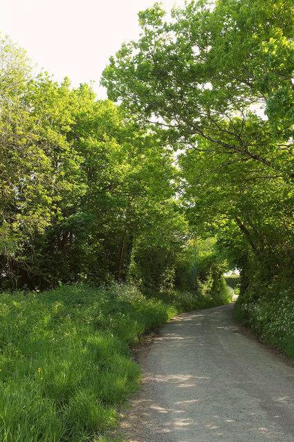Lane to Caute